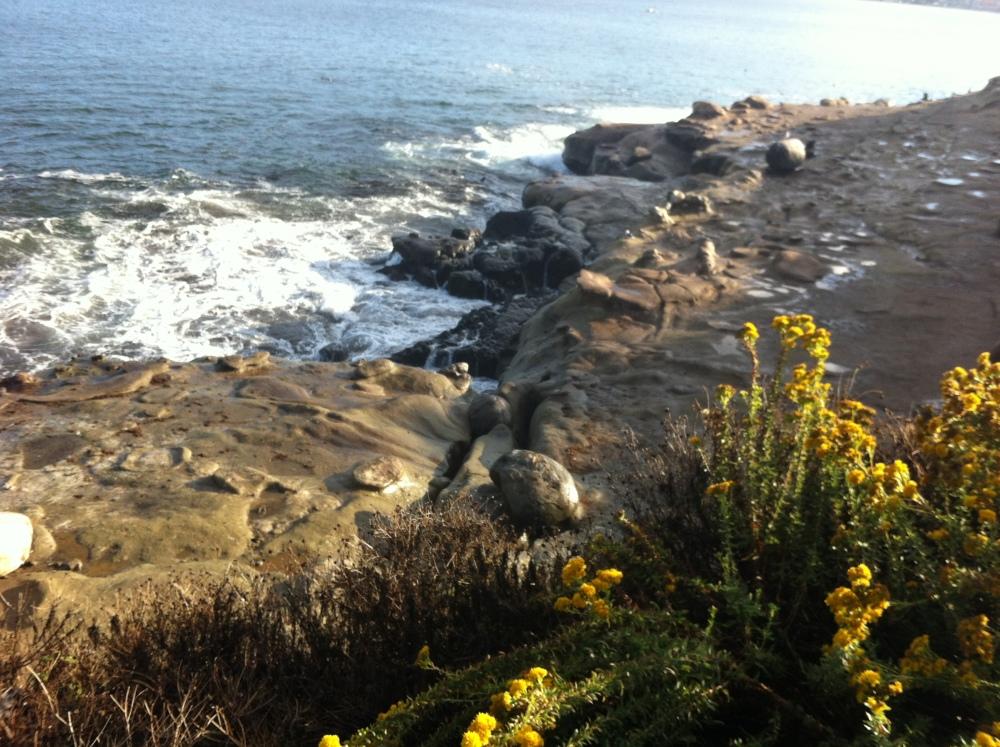 Incredible San Diego - La Jolla (2/6)