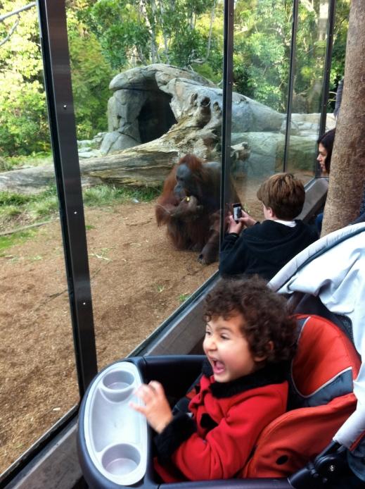 Orangutans - San Diego Zoo
