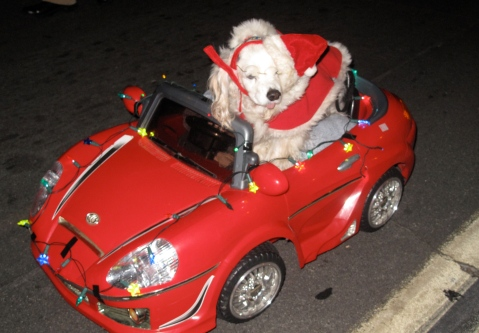 Dog in a Car with Christmas Lights at Balboa Park
