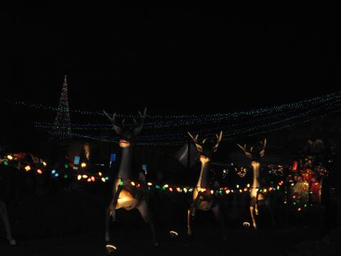 Reindeers, December Nights at Balboa Park