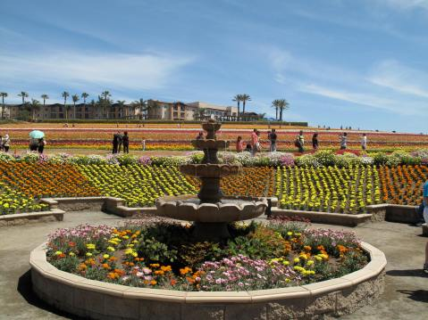 Grand Pacific Palisades and the Flower Fields, Carlsbad
