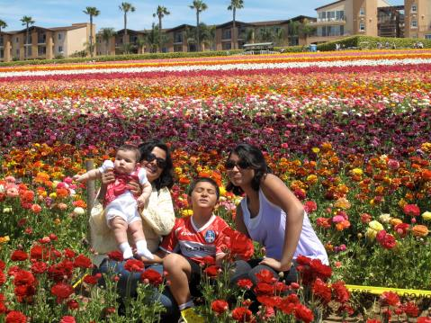 Flower Fields and Grand Pacific Palisades, San Diego