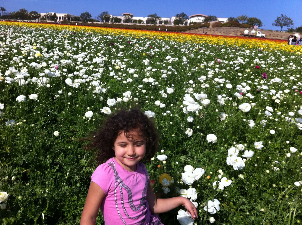 The Flower Fields Are Ablaze With The Beauty of Color - Carlsbad, CA (San Diego) (3/6)