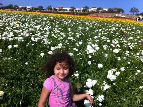 Flower Fields, Carlsbad, CA (San Diego)
