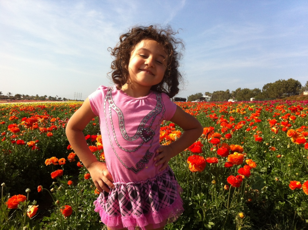 The Flower Fields Are Ablaze With The Beauty of Color - Carlsbad, CA (San Diego) (2/6)