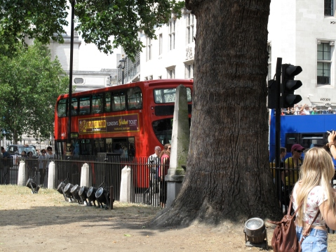 London Bus in Westminster