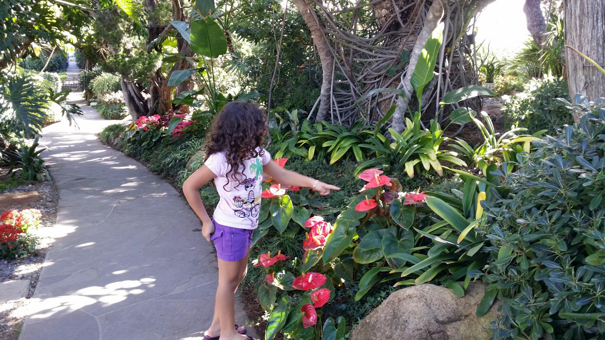 Paradise At Meditation Gardens In Encinitas Luchanik