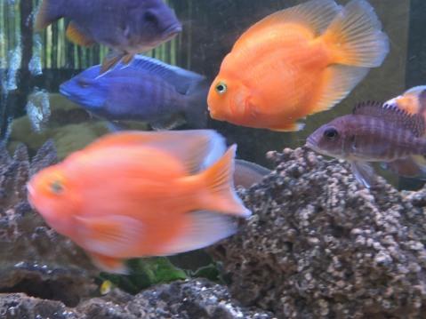 Fish Tank in the Spa at Delphin Imperial, Lara