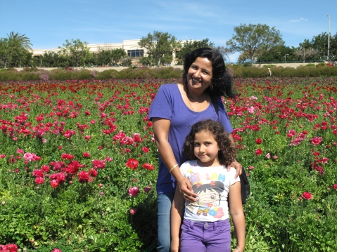 The Flower Fields, Carlsbad - San Diego