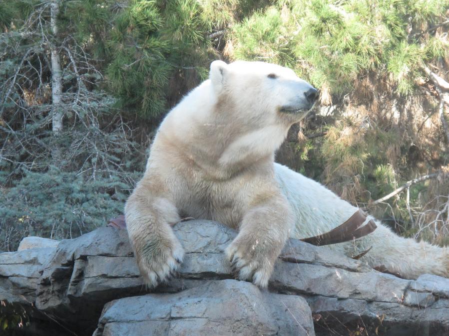 Polar Bear exhibit at San Diego Zoo