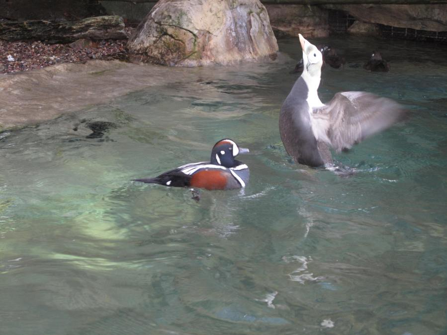 Ducks and birds at San Diego Zoo