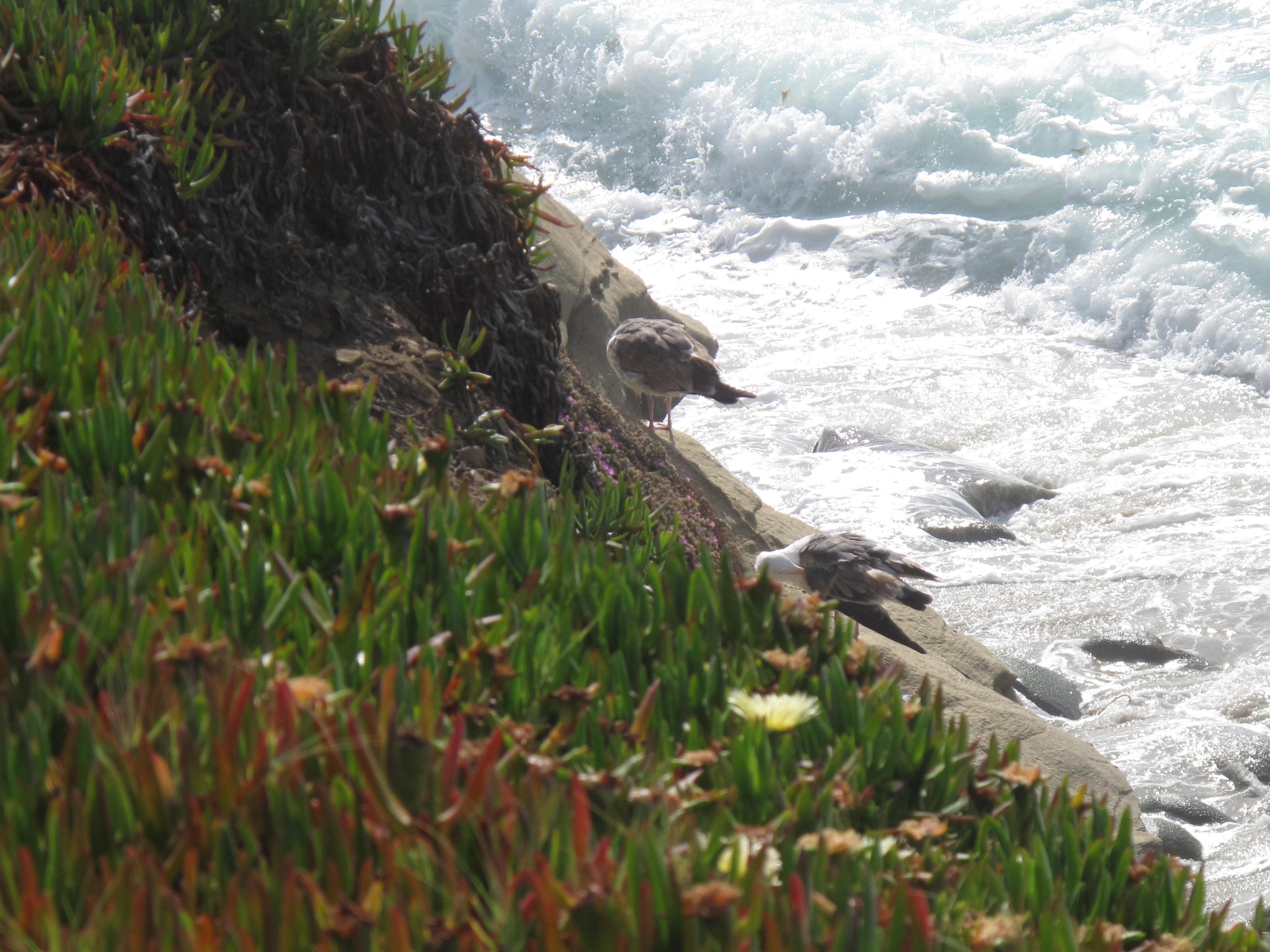 La Jolla Cove, San Diego